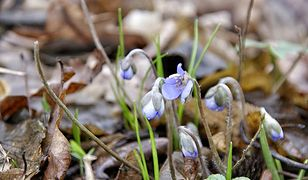 Pierwszy dzień wiosny 2019: Kalendarzowa wiosna jest już coraz bliżej. Sprawdź, kiedy zacznie się cieplejsza pora roku