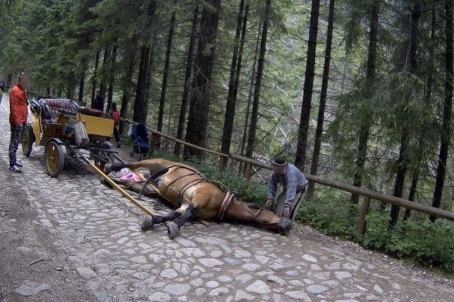 Koń padł w Tatrach. Szokujące sceny