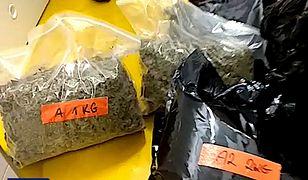 30 kg marihuany i 1280 krzaków konopi indyjskich zabezpieczyli funkcjonariusze CBŚP. A miały być pieczarki...