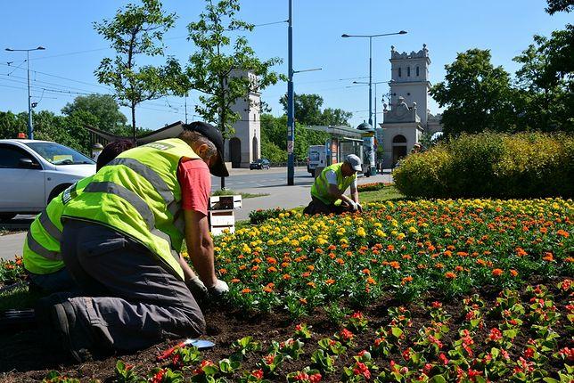 Warszawa. To już wiosna. Za chwilę miasto rozkwitnie tysiącem kwiatów