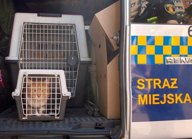 Warszawa. Po uratowaniu kot został umieszczony w transporterze Ekopatrolu