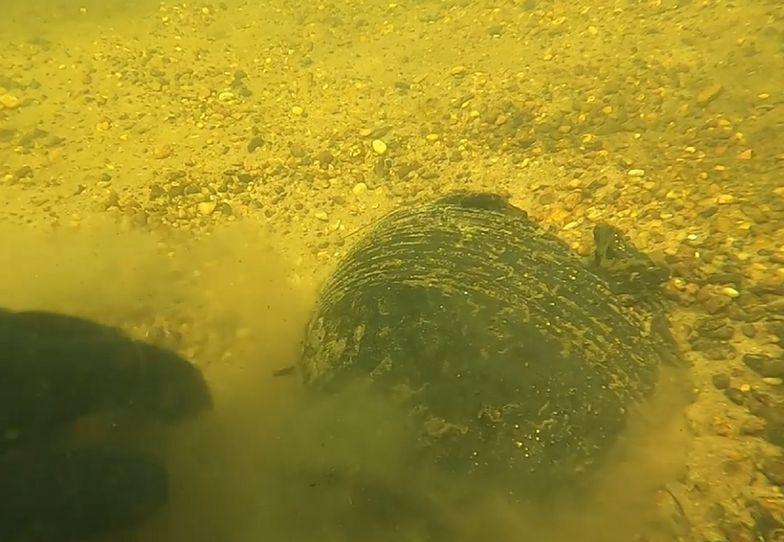 Wielkopolska. Niezwykłe odkrycie na dnie rzeki. Głos zabrał archeolog