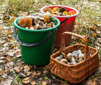 Większość trujących grzybów ma pod kapeluszem blaszki