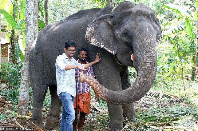 Nie żyje najstarszy słoń na świecie. Miał 88 lat