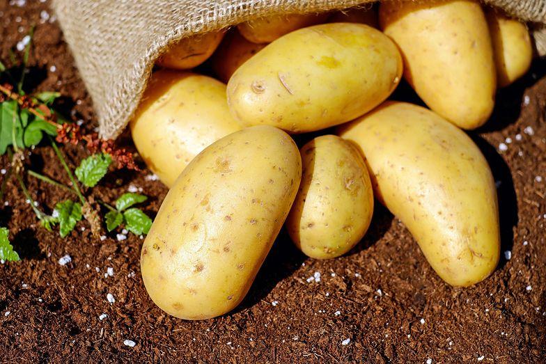 Poszybowały ceny ziemniaków. W 2021 roku skoczyły o 70 proc.