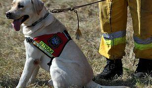 Psy ratownicze straciły miejsce nauki
