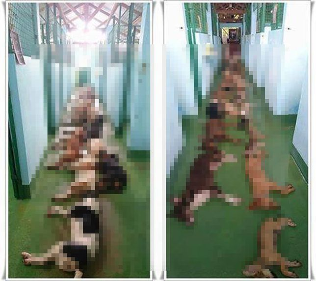 Zdjęcia uśpionych psów poruszyły internautów
