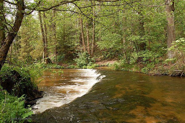Szumy na rzece Tanwi należą do największych atrakcji Roztocza
