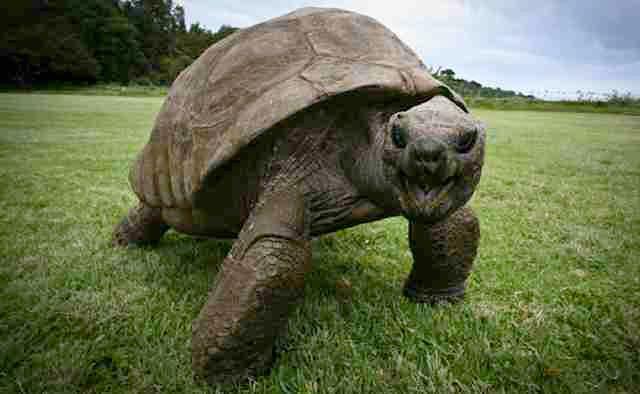 Żółw Jonathan