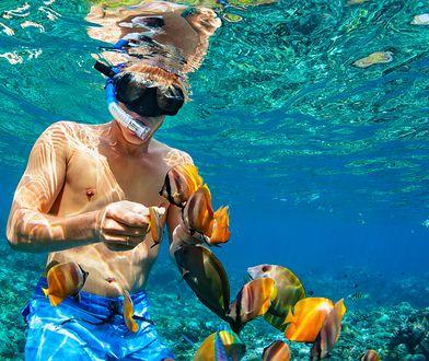 Snorkeling to świetny sposób na zapoznanie się z podwodną fauną i florą.