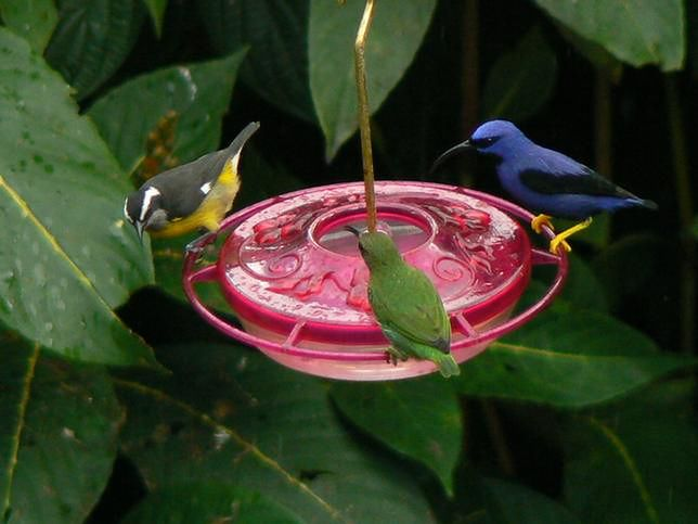 Trynidad słynie z wielobarwnych, rzadko spotykanych w innych częściach świata ptaków