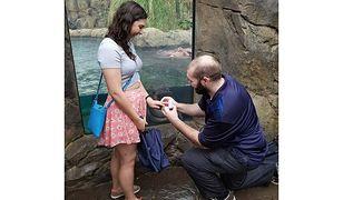 Mistrzyni drugiego planu. Hipopotamica z zoo w Cincinnati uświetniła zdjęcia zaręczynowe