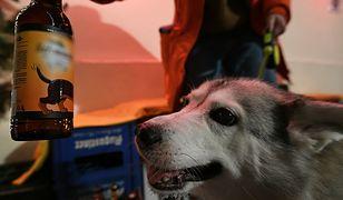 Wielka Brytania otworzyła bar dla psów (zdj. ilustr.)