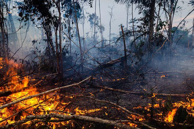Ubiegłoroczne pożary w Amazonii