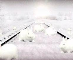 """Ile królików jest na rysunku? """"Tylko jeden procent ludzi widzi wszystkie"""""""