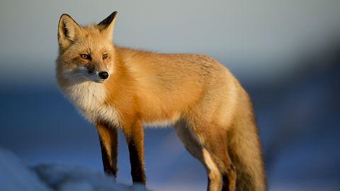Firefox ochroni przed cryptojackingiem. Zablokuje skrypty kopiące kryptowaluty