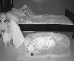 Dziecko wyszło w nocy z łóżka i podeszło do psa. Niewiarygodne, co się stało