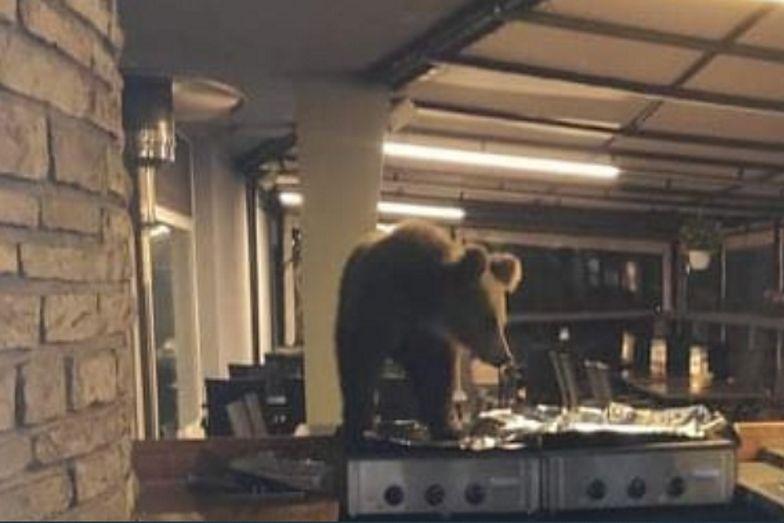 Drapieżnik w Tatrach. Niedźwiedź wszedł do hotelu w Nowym Smokowcu