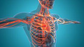 Układ krwionośny - żyły, tętnice, włosowate naczynia krwionośne, serce