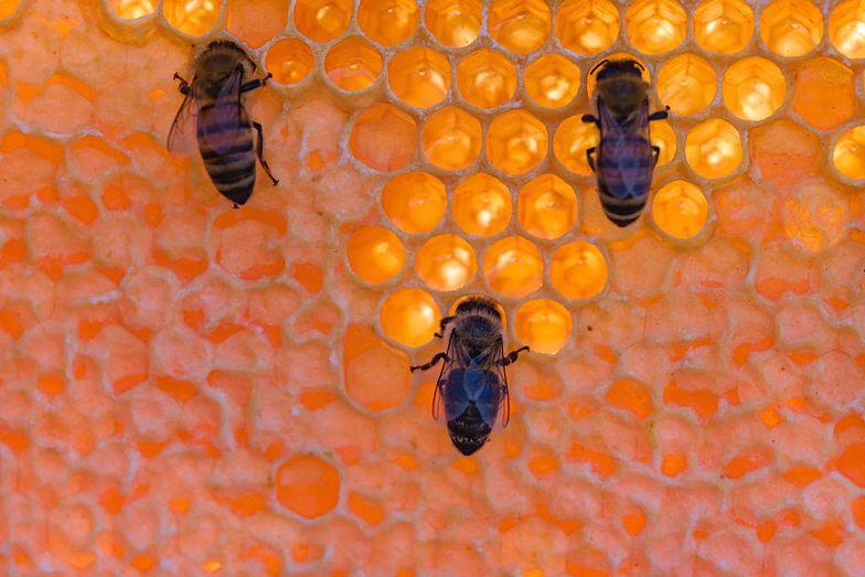 Mszczonów. Zginęły blisko 2 mln pszczół