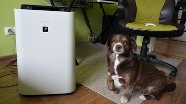 Oczyszczacz powietrza z funkcją nawilżania? Średniopółkowy Sharp UA-HD50E-L w akcji!