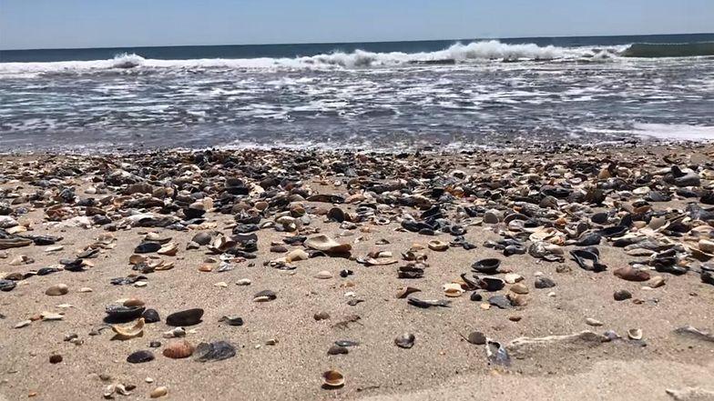 Plaża w Karolinie Północnej (USA).