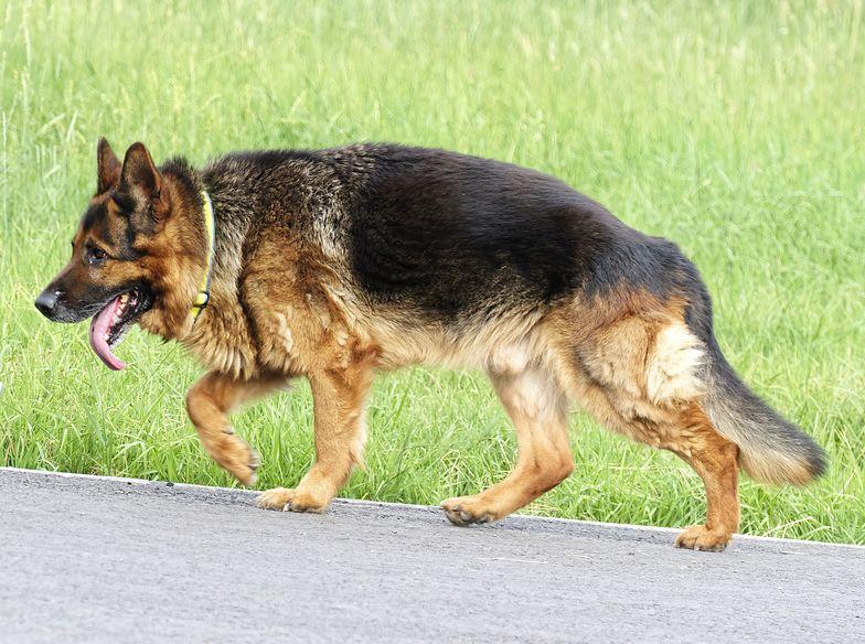 Od dziś wyższe kary za psa bez nadzoru. Istnieją jednak znaczące wyjątki