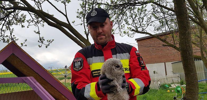 Dolny Śląsk. Młoda sowa uratowana. Mogła zginąć pod kołami samochodu