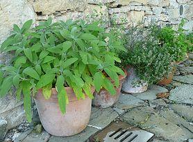 Zioła - zioła lecznicze, melisa i rumianek, piołun i mieta