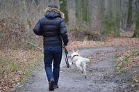 spacer z psem pies