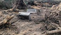 Proboszcz chciał uprzątnąć cmentarz, zlecił wycinkę drzew. Parafia z gigantyczną karą