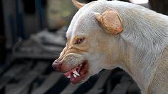 Jak zachować się, kiedy spotkamy agresywnego psa? Ekspert podpowiada