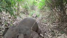 Stado martwych słoni. Makabryczne odkrycie leśników z Indii