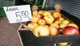 Sadownicy zdesperowani. Kupują od nich jabłka po 1 zł. Sprzedają nawet 5 razy drożej