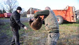 """Spór o zabijanie bobrów. """"Robią za darmo to, co ludzie za miliony"""""""