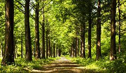 Koniec spacerów. Zakaz wstępu do lasów