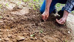 Rolnicy chcą obniżenia wieku emerytalnego
