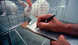 """Doświadczenia na zwierzętach w Polsce. """"Ich wyeliminowanie byłoby ze szkodą dla ludzi"""""""