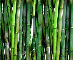 GIS: Bambus na liście niedozwolonych dodatków
