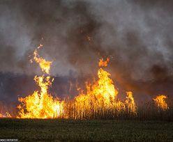 Biebrzański Park Narodowy. Radni i aktywiści kłócą się o zbiórkę dla strażaków