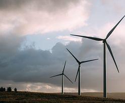 Polska awaryjnie eksportowała prąd. Powód? Rekordowa produkcja z wiatru