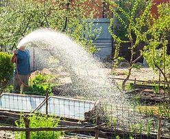 9,4 tysiąca ludzi nie ma wody, bo sąsiedzi podlewają ogródki