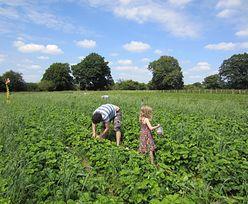 Rolnicy przez pandemię wpadli w długi. Eksperci podpowiadają, jak z nich wybrnąć