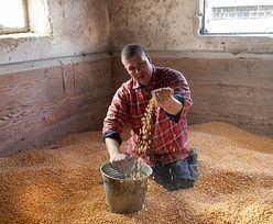 Rajd notowań na rynkach rolnych. Ceny najwyższe od ponad 8 lat