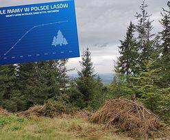Czy naprawdę Polska wycina swoje lasy w pień? Sprawdziliśmy twarde dane, oto co pokazują