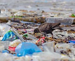 Polska stanie się plastikowym śmietnikiem Europy? Rząd zaspał z ważnymi przepisami