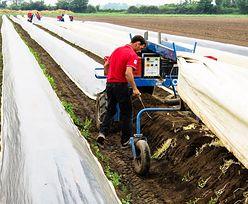 Niemcy wycofują się z dopłat dla polskich pracowników