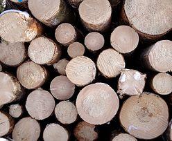 Ceny drewna biją rekordy. Skok cen uderza w sektor meblarki i tartaki