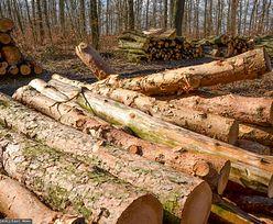 Polski samochód elektryczny kosztem lasów? Umożliwi to nowa ustawa