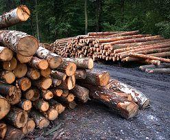 Drewno z lasu trafi do pieców. Przez koronawirusa